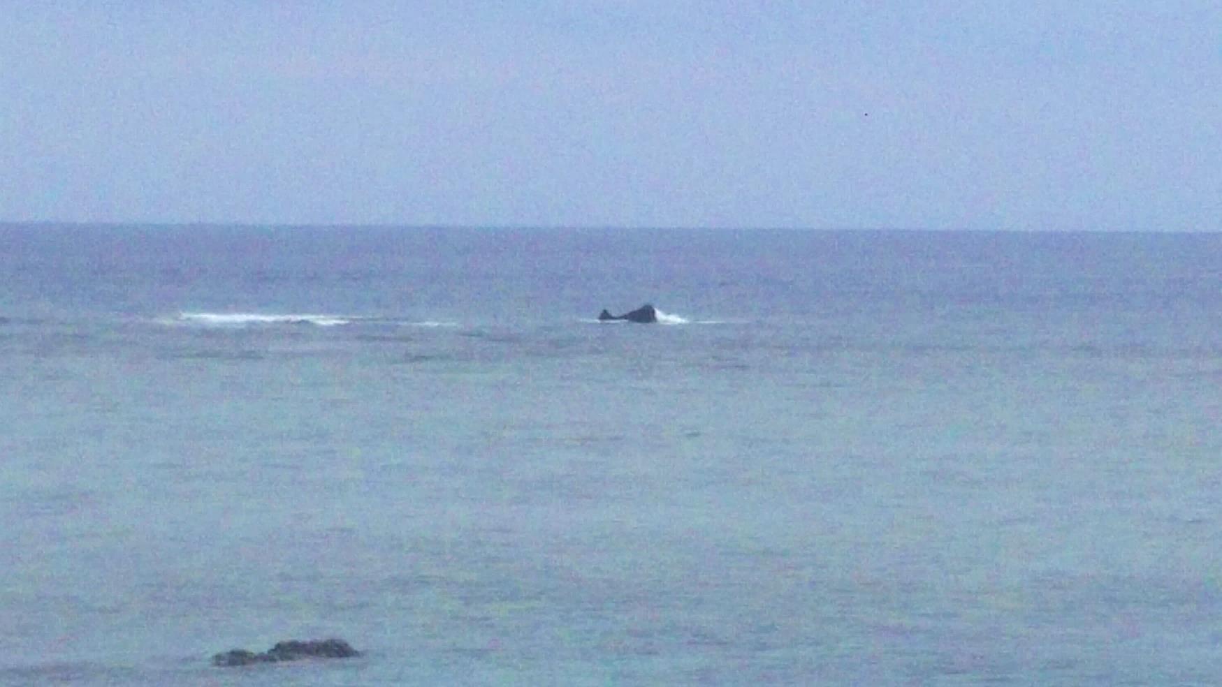 クジラの赤ちゃん@前浜海岸